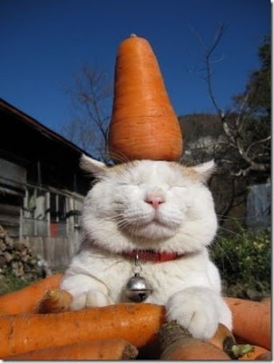 ... yang suka narsis kucingpun juga gak percaya lihat a
