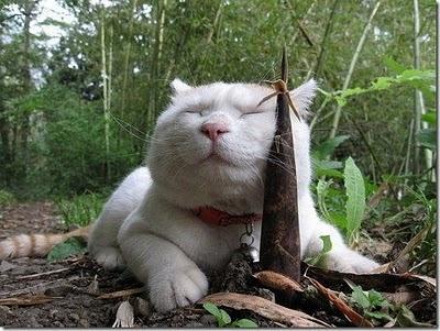 cuma manusia yang suka narsis, kucingpun juga Kucing Ke